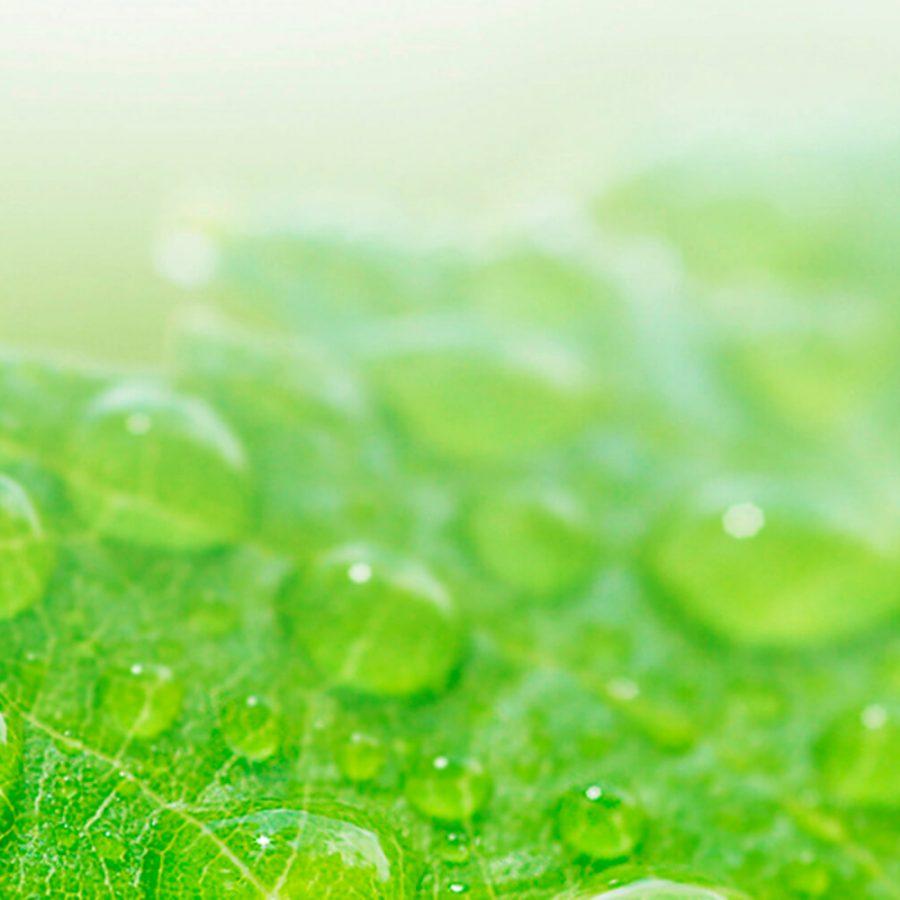 Water_Leaf_t